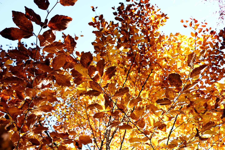 rzeczy, które warto zrobić jesienią