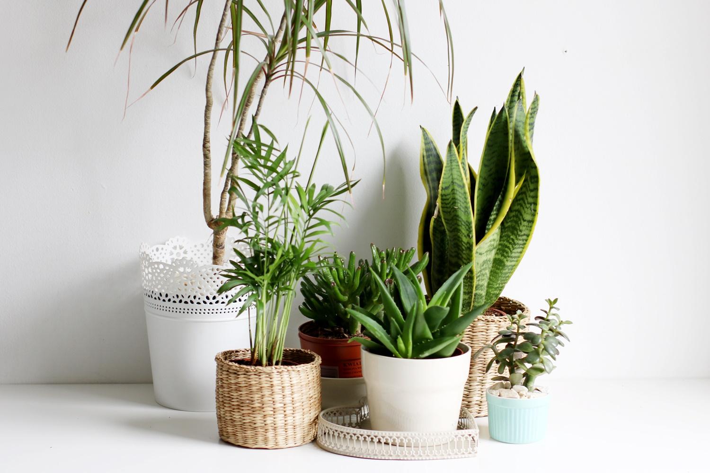 jakie rośliny doniczkowe wybrać